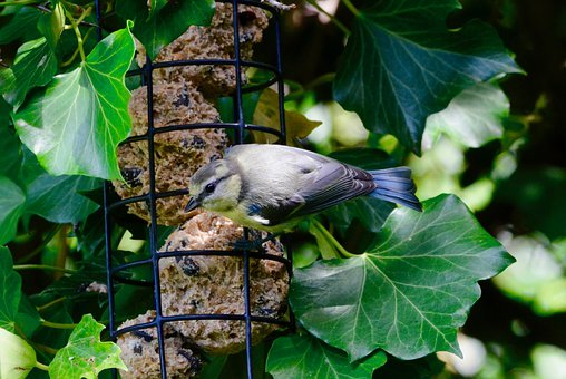 Tit, Feeding, Animal World, Garden
