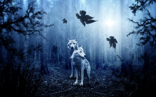 Wolf, Forest, Dark, Predator, Animal